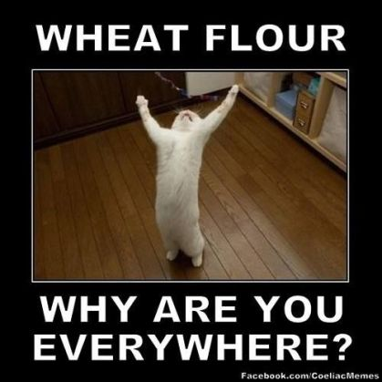 f2c2b1d59e28a243863fdfc621d73dd4--funny-cat-memes-funny-cats